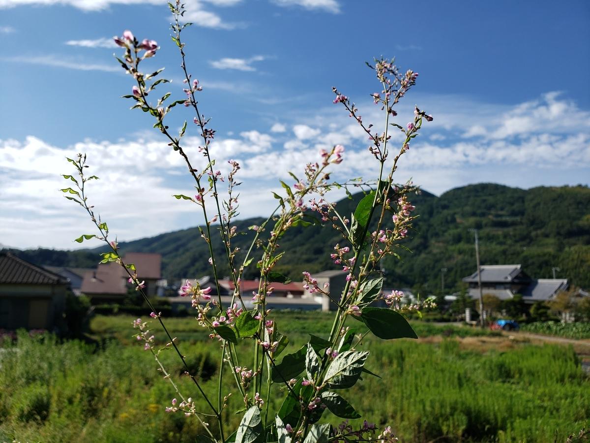 f:id:Hikokigumo:20200921011019j:plain