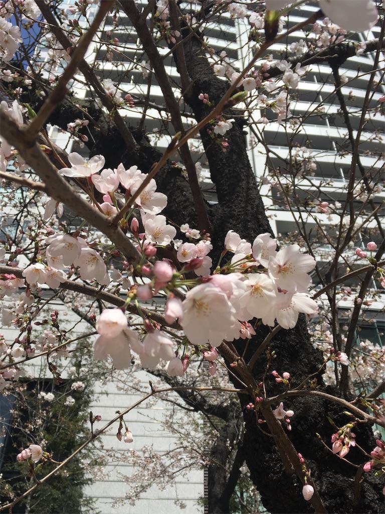 f:id:Himachan:20180323182347j:image
