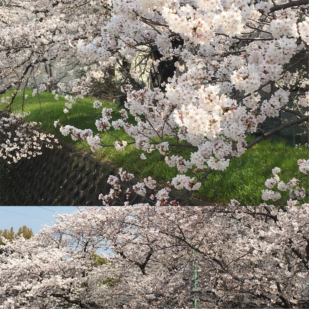 f:id:Himachan:20180327130840j:image