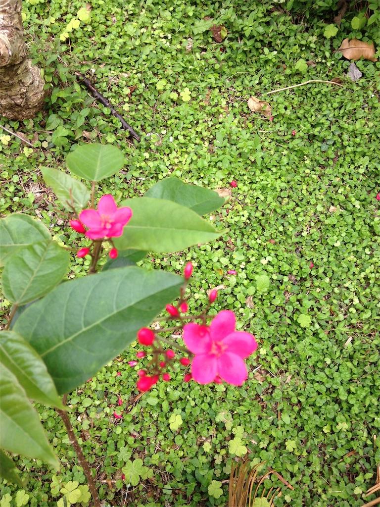 f:id:Himachan:20180425233221j:image