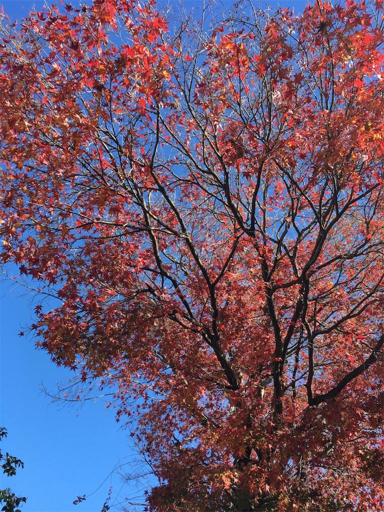 f:id:Himachan:20181212133807j:image