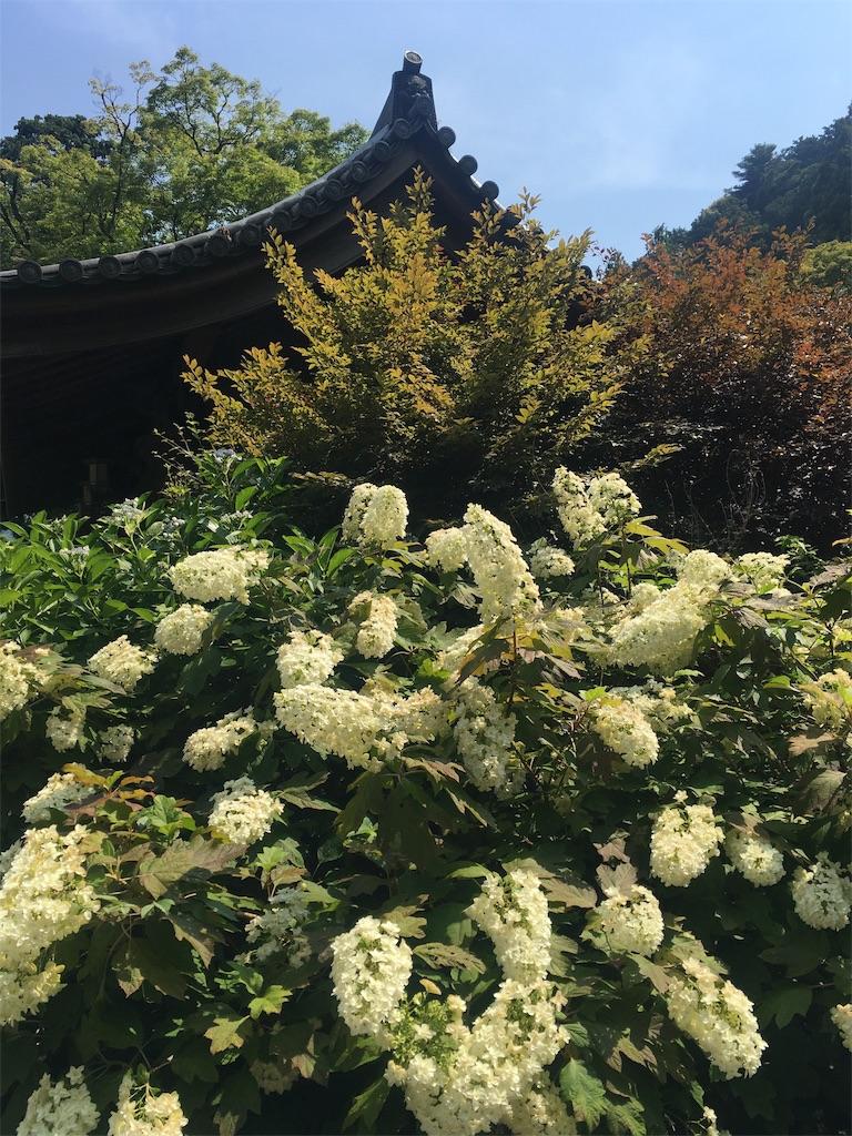 f:id:Himachan:20190620235624j:image
