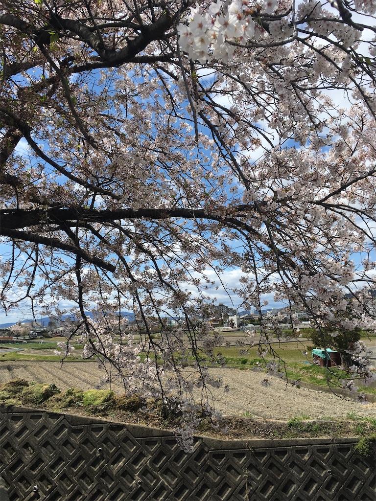 f:id:Himachan:20200410145758j:image