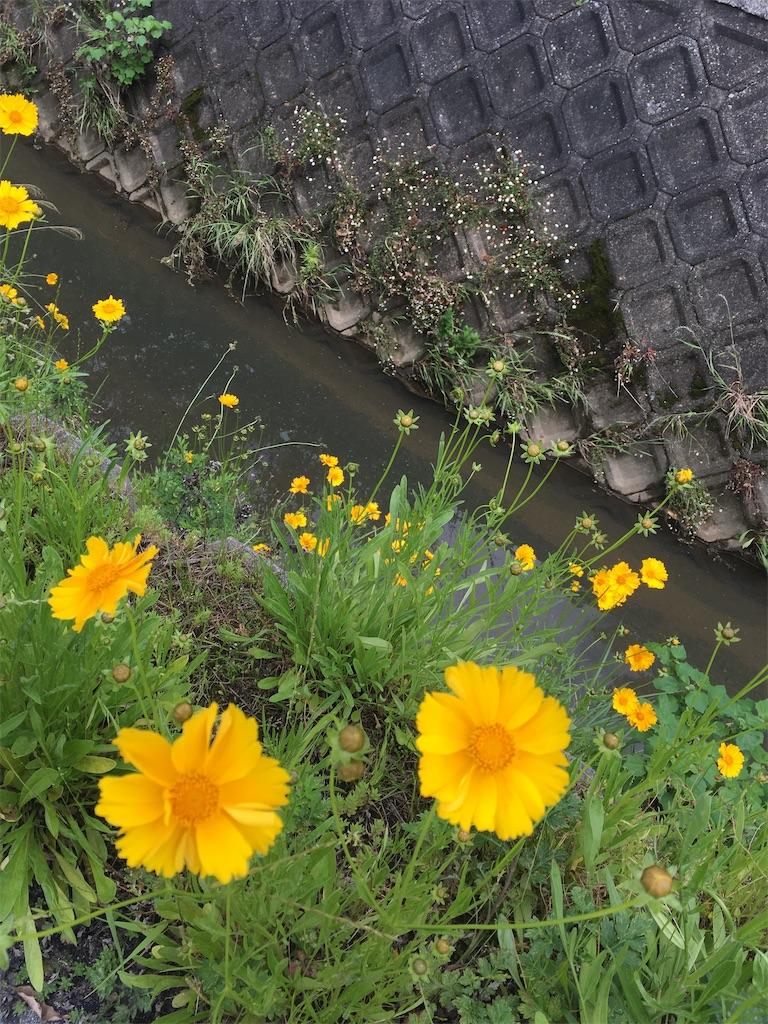 f:id:Himachan:20200517204342j:image