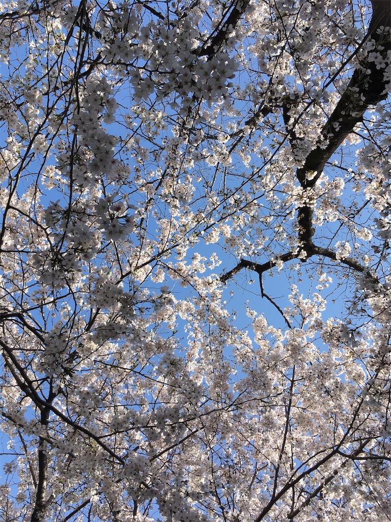 f:id:Himawari-biyori07:20210325142156j:image