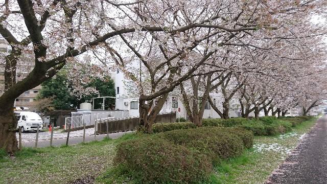 f:id:Hiroaki_M:20200330075254j:image
