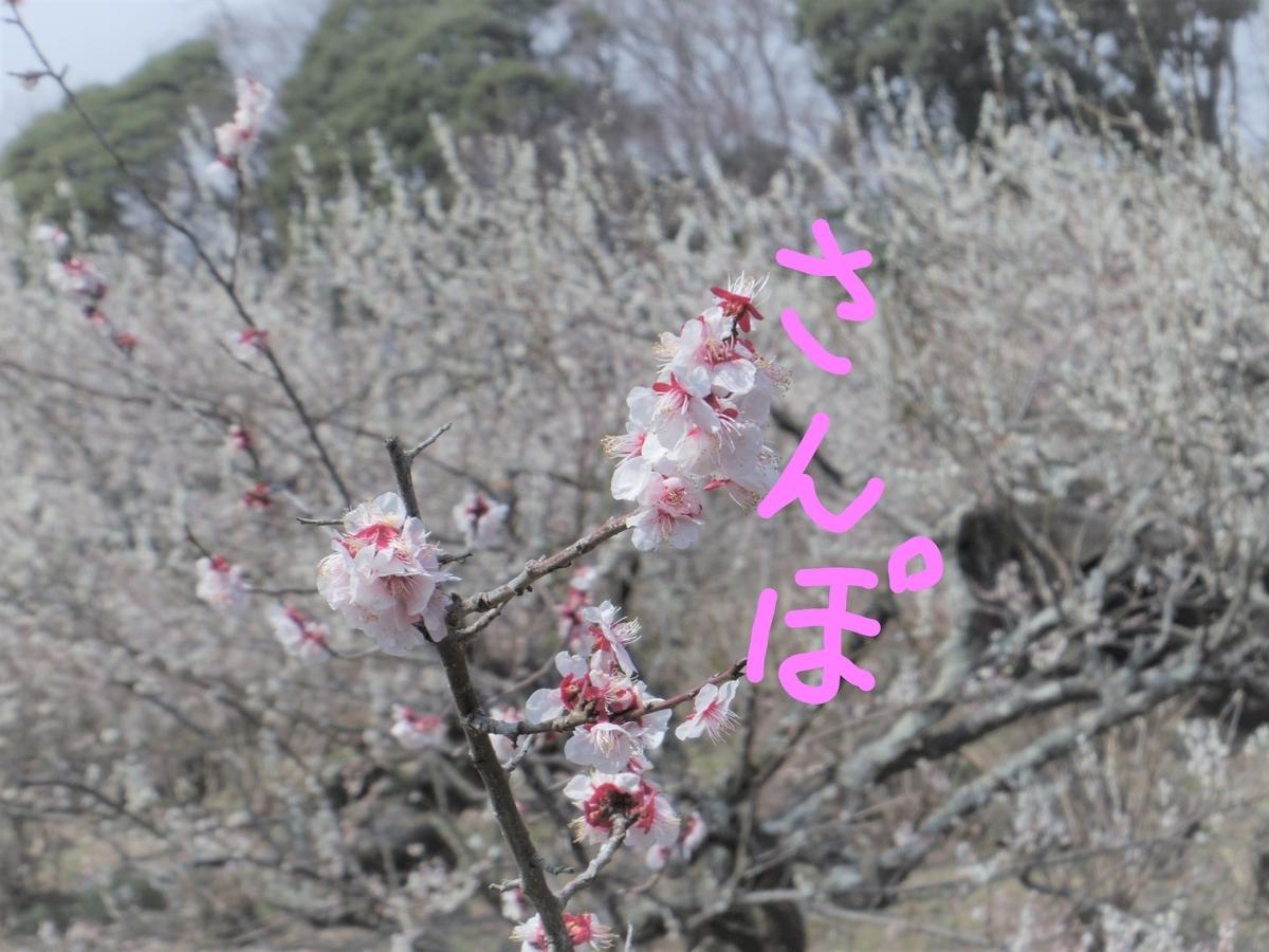 f:id:Hirohirona:20190316223336j:plain