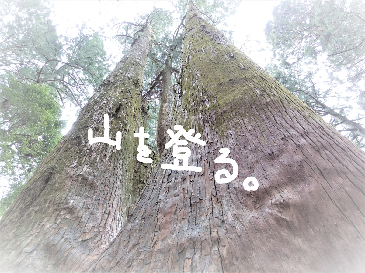 f:id:Hirohirona:20190317230139j:plain