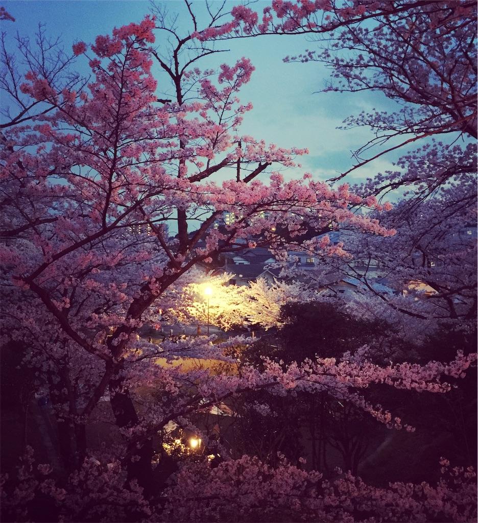 f:id:Hiroki12:20190308124943j:image