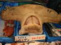 シュモクザメの首@八食センター