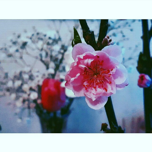f:id:Huu_chuchu:20170226205034j:image