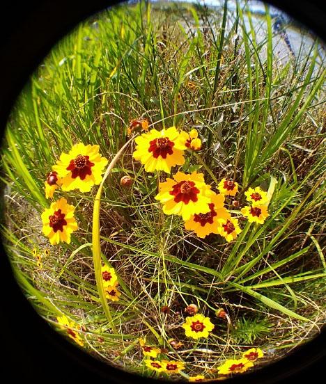 魚眼レンズで取った花の写真