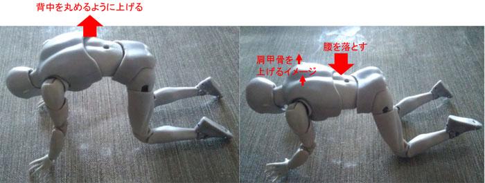背中と肩甲骨のストレッチ