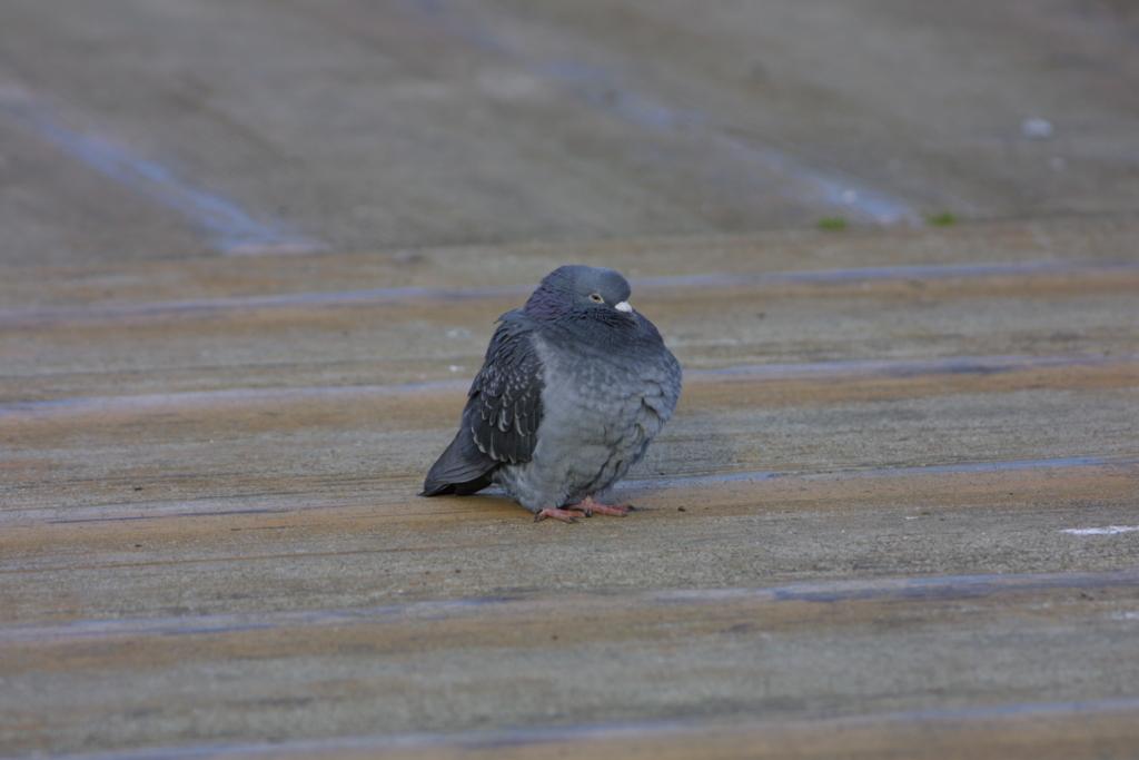 f:id:Hydrornis:20170722000930j:plain
