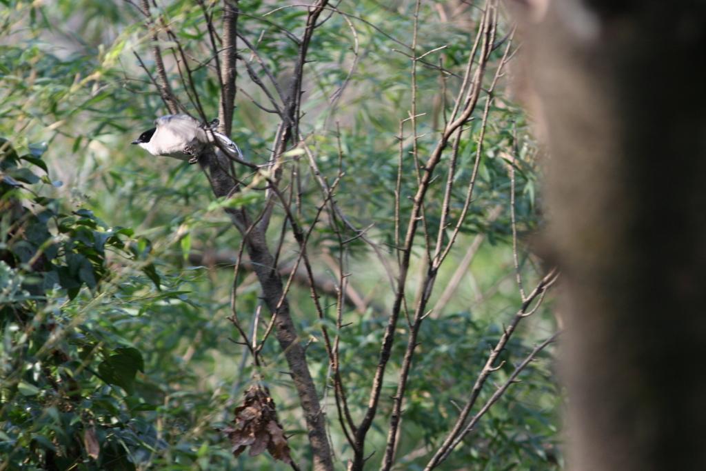f:id:Hydrornis:20170722000933j:plain