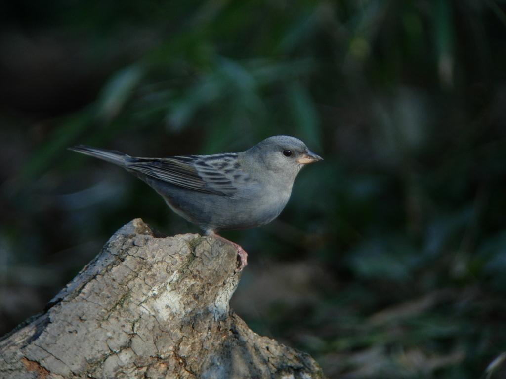 f:id:Hydrornis:20170821000209j:plain