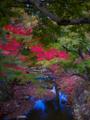 奈良公園脇の小川