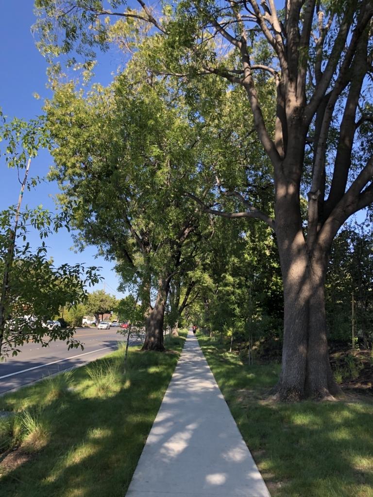 Apple本社を囲む歩道の写真。両側には木が植えられている