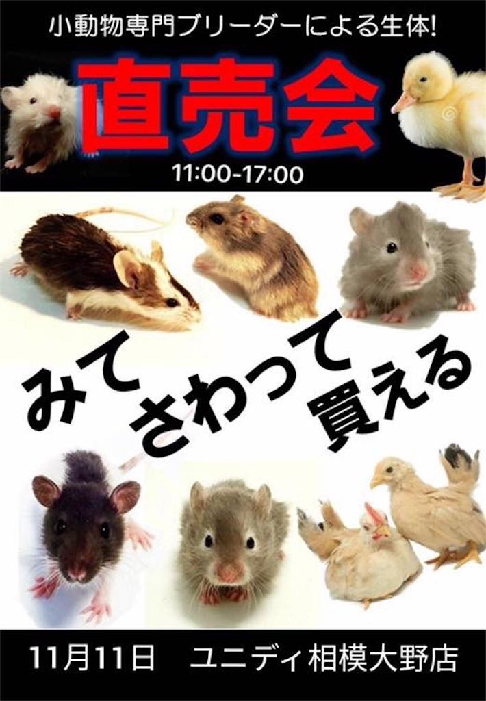 f:id:IKOMA_Tsubasa8:20181113021707j:image