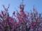 [花][2012]