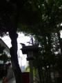 [神社][氷川神社]