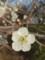 [梅][春][花]