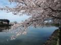 [2017][桜][春]