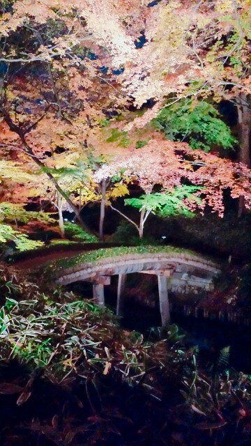 f:id:Ieyasu:20191210010543j:image