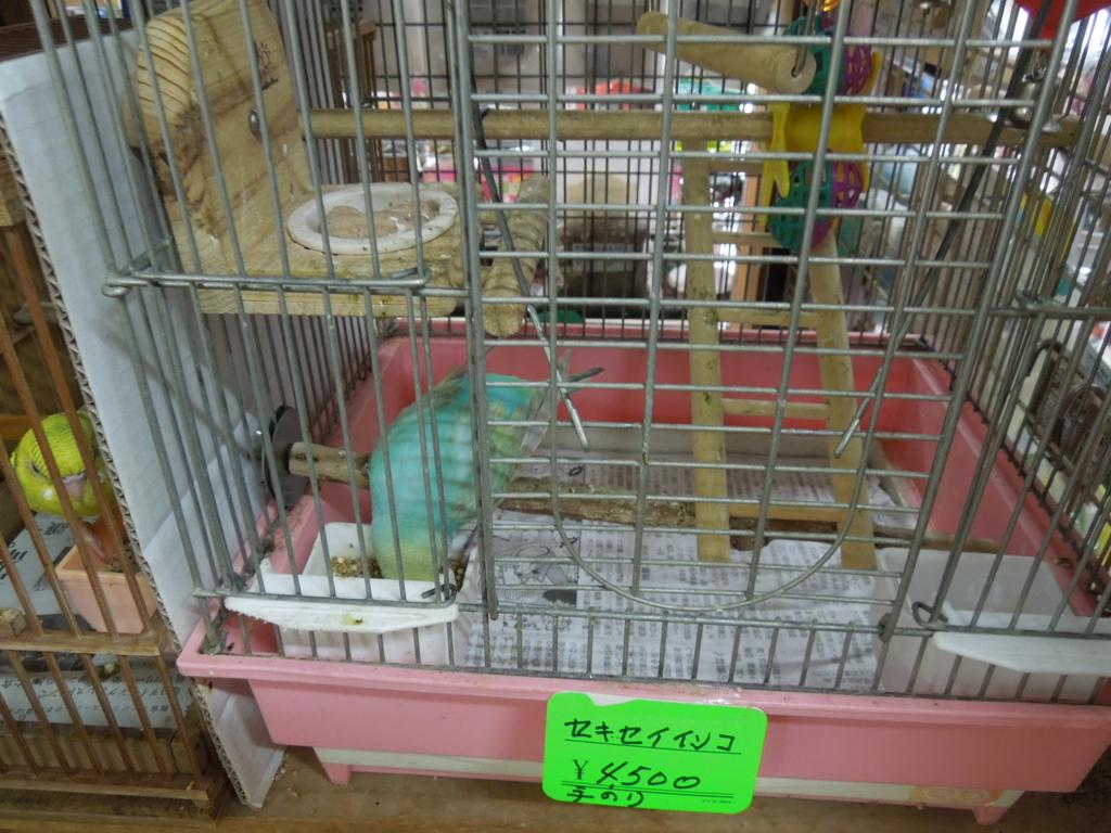 f:id:Ikegamiblog_tokyo:20160724220858j:plain