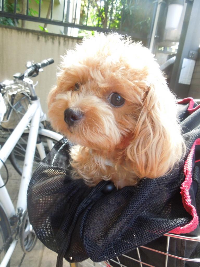 f:id:Ikegamiblog_tokyo:20160827160907j:plain