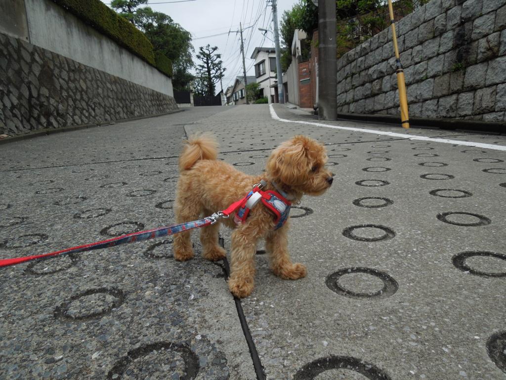 f:id:Ikegamiblog_tokyo:20160911162937j:plain