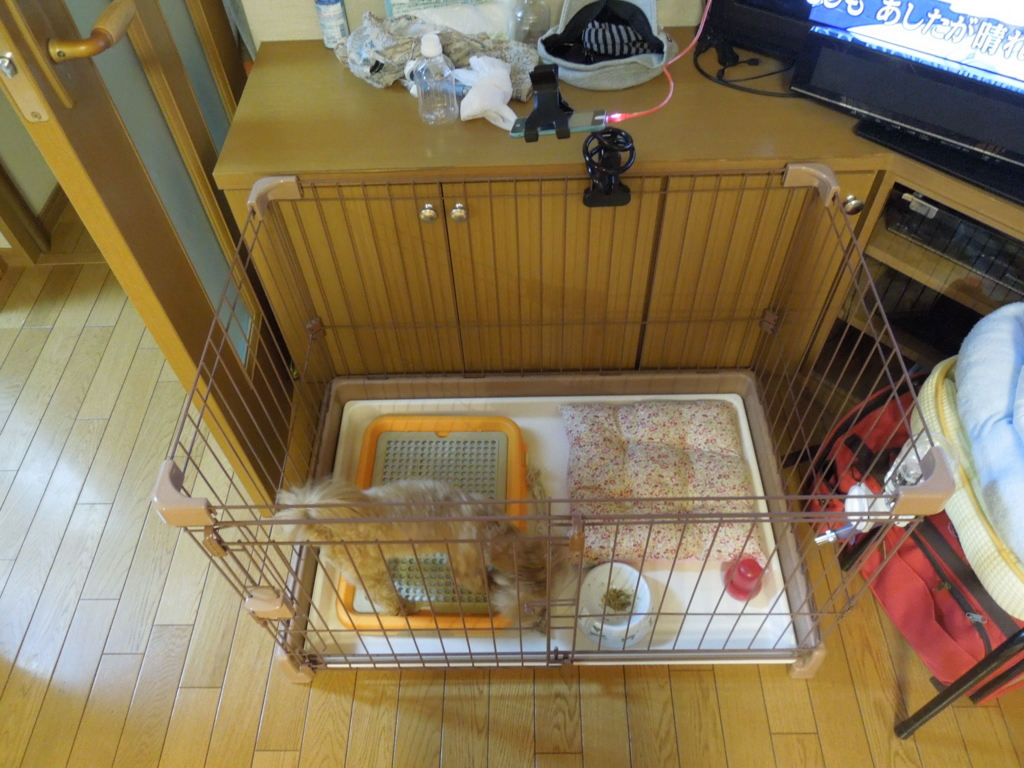 f:id:Ikegamiblog_tokyo:20161003230411j:plain