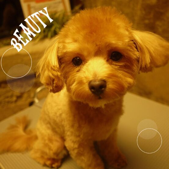 f:id:Ikegamiblog_tokyo:20161101215622j:plain