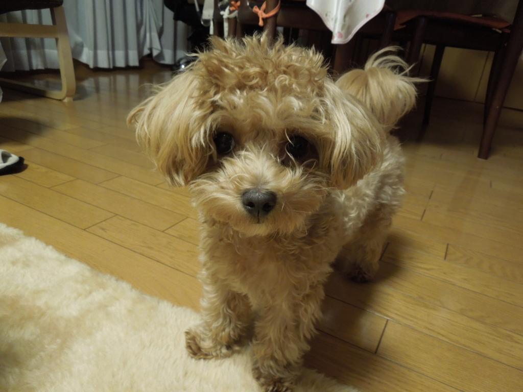 f:id:Ikegamiblog_tokyo:20161101220021j:plain