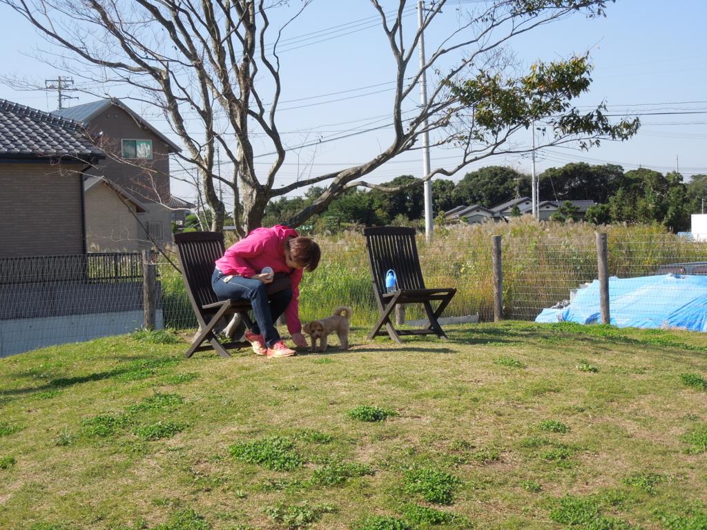 f:id:Ikegamiblog_tokyo:20161104231039j:plain