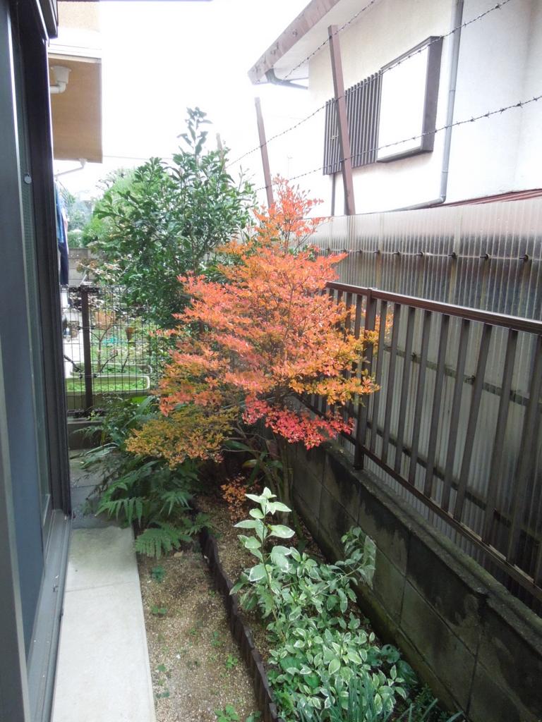 f:id:Ikegamiblog_tokyo:20161108221302j:plain