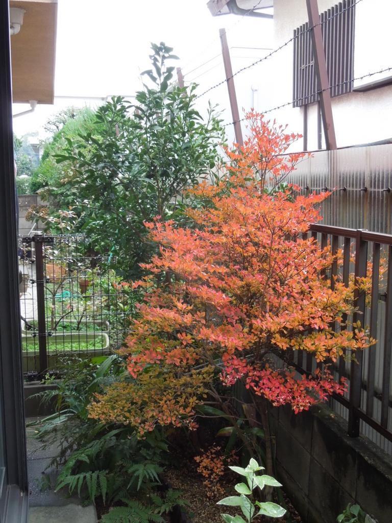 f:id:Ikegamiblog_tokyo:20161108221420j:plain