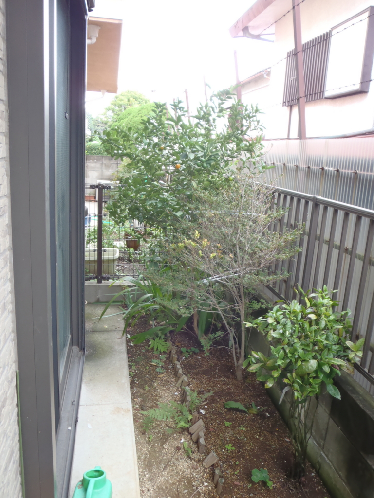 f:id:Ikegamiblog_tokyo:20161110221329j:plain