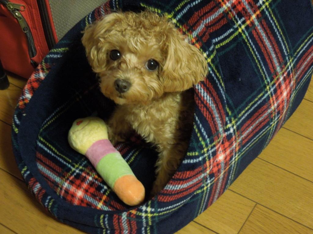 f:id:Ikegamiblog_tokyo:20161124145953j:plain