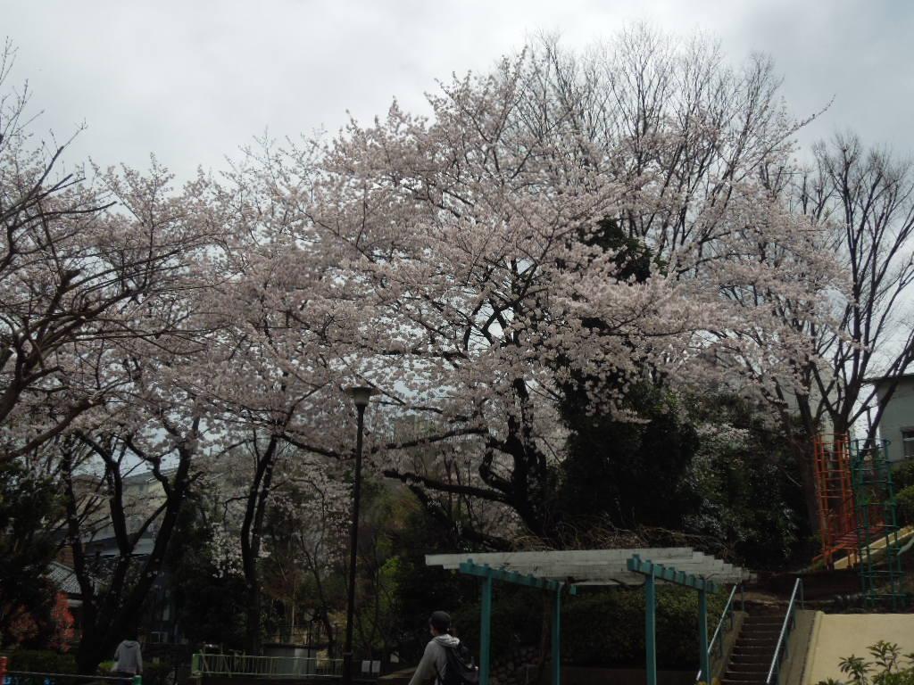 f:id:Ikegamiblog_tokyo:20170409162756j:plain