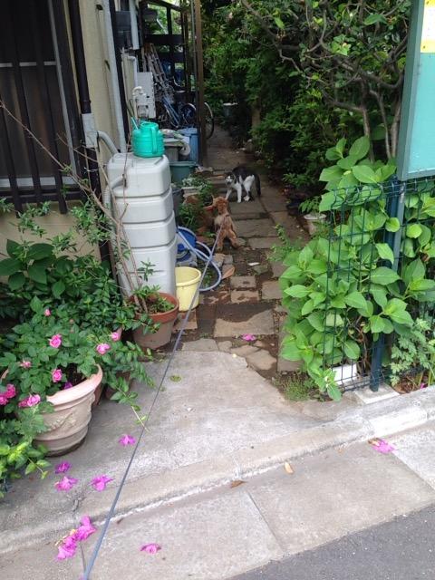 f:id:Ikegamiblog_tokyo:20170520000437j:plain