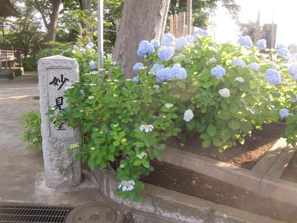 f:id:Ikegamiblog_tokyo:20170604211740j:plain