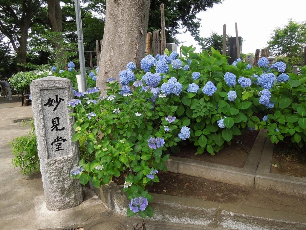 f:id:Ikegamiblog_tokyo:20170625144506j:plain