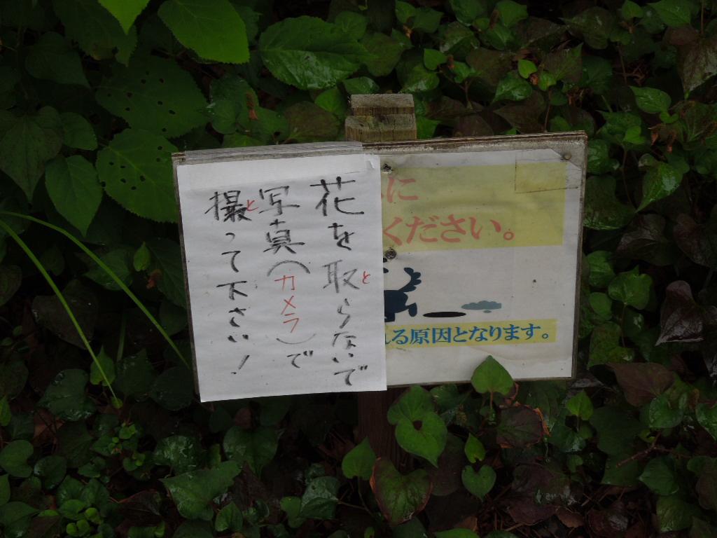 f:id:Ikegamiblog_tokyo:20170701124549j:plain