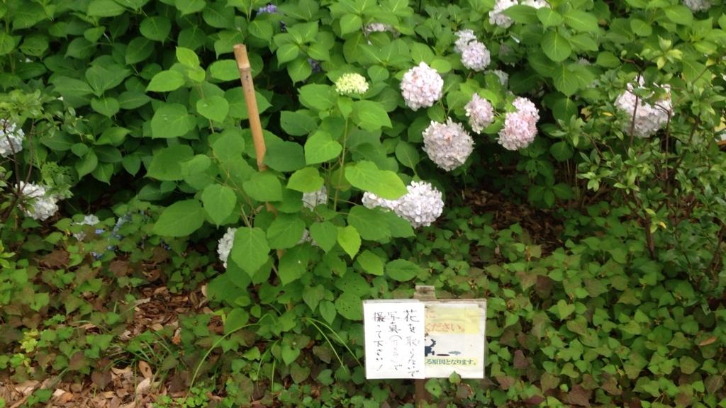 f:id:Ikegamiblog_tokyo:20170701135218j:plain