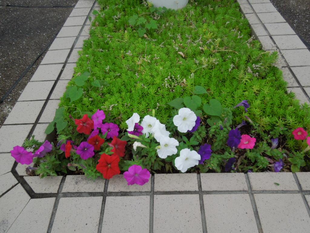 f:id:Ikegamiblog_tokyo:20170716163623j:plain