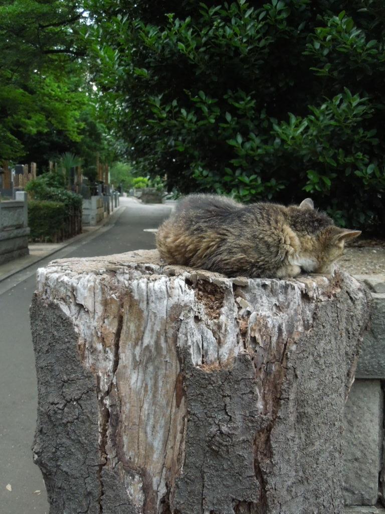 f:id:Ikegamiblog_tokyo:20170723010053j:plain