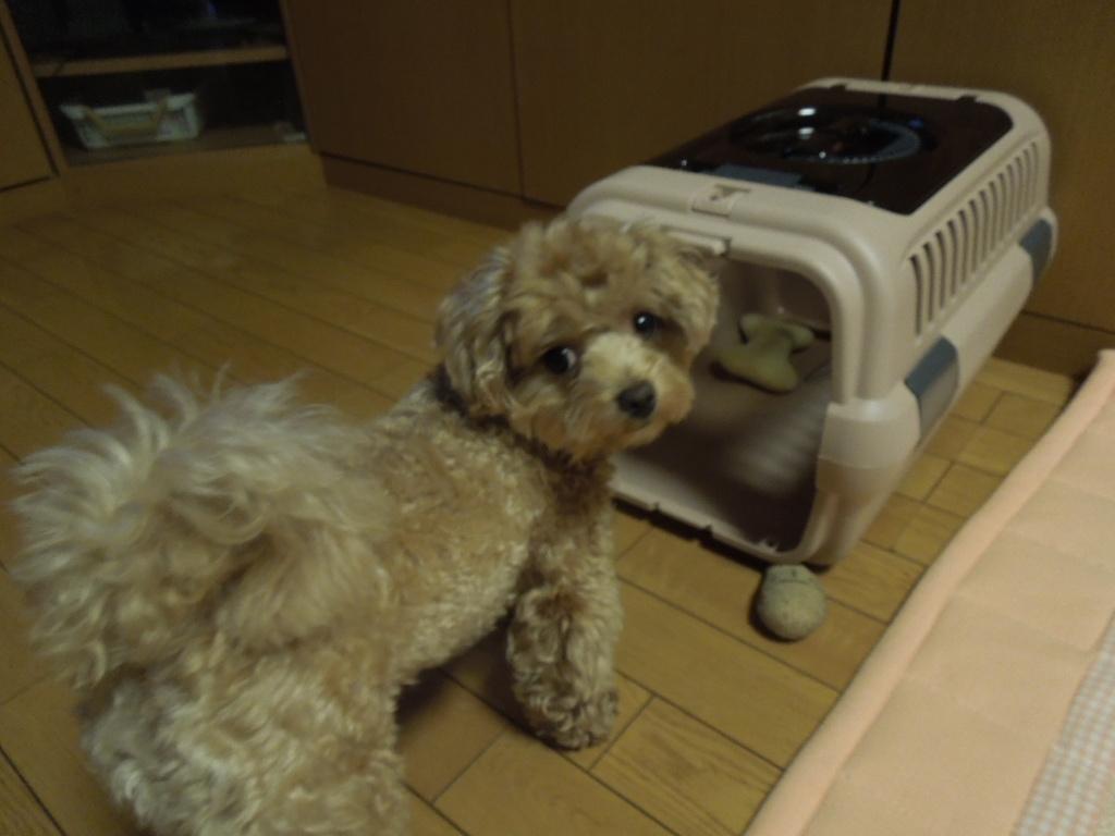 f:id:Ikegamiblog_tokyo:20170730215247j:plain