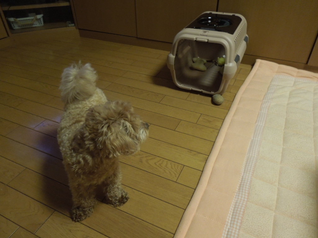 f:id:Ikegamiblog_tokyo:20170730215458j:plain
