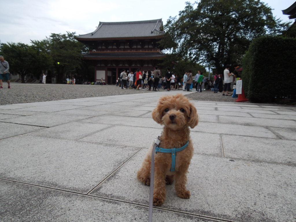 f:id:Ikegamiblog_tokyo:20171003233855j:plain